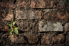 Plant and wall Royalty Free Stock Photo