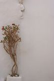 Plant on the walll. Plant on the white walll Royalty Free Stock Photos