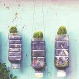 Plant walls Royalty Free Stock Photo