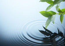 Plant and water. Water ripple on a rainy day Stock Images