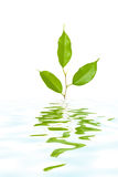 Plant in water Royalty Free Stock Images
