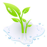 Plant in water Royalty Free Stock Photos