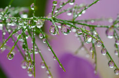 Plant with water drops Stock Photo