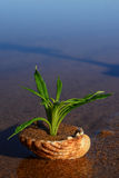 Plant in water Royalty Free Stock Image