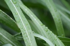 Plant and waterdrops Stock Photo