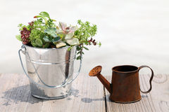 Plant with a watering can. Little plant in a bucket with a watering can Stock Photo