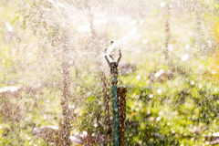 Plant watering Royalty Free Stock Photo