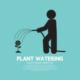 Plant Watering With Rubber Hose Tube Stock Photography