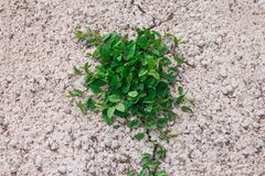 The Bush grows from under asphalt, the grass grows from under concrete, the concept of force of the nature, very much there is a w stock image