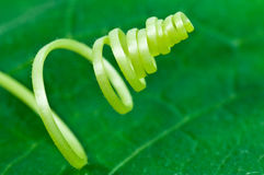 Plant whirl close up Stock Images