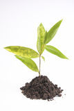 Plant in white Stock Image