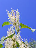 Plant with white flowers Stock Image