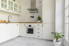Plant in white kitchen interior with cabinets and silver cooker royalty free stock image