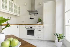Plant in white minimal kitchen interior with silver cooker hood. Above wooden countertop. Real photo Royalty Free Stock Photo