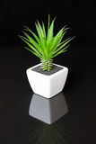 Plant in white pot Royalty Free Stock Image