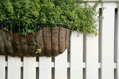 The plant on white wooden fence Stock Photo