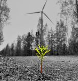 Plant in a windmill background stock photo