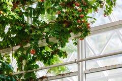 Plant on window background Stock Photography