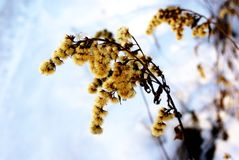 Plant in winter Royalty Free Stock Images