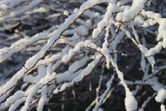 Heavy white snow on branches stock images