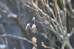 Snow on branches and leaves stock images