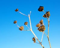 Plant. Winter frost withered under the North plant Stock Images