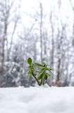 Plant in the winter growing out of snow Stock Photos