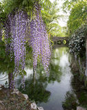 Plant of wisteria and historic bridge in the distance in the Gar Stock Images