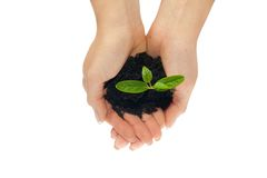 Plant in woman hands Royalty Free Stock Photo