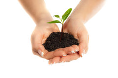 Plant in woman hands Stock Photo