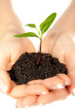 Plant in woman hands Royalty Free Stock Photography