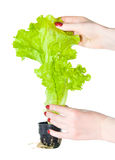 Plant with woman hands Stock Photos