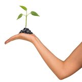 Plant in womans hand Royalty Free Stock Photos