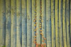 Plant on wood. Royalty Free Stock Photos
