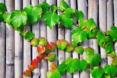 Plant on wood. Growing plant on wood background Stock Images