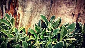 Plant&Wood Stock Photo