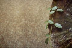 Plant on wood Royalty Free Stock Photo