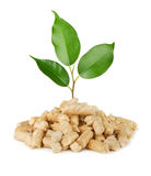 Plant and wood pellets. Young plant growing out of wood pellets isolated on white Royalty Free Stock Image