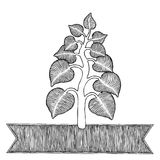 Plant woodcut Stock Images
