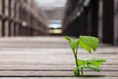 Plant in wooden bridge Stock Photo