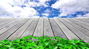 Plant on wooden floor go to sky.  Stock Photography