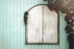 Plant on wooden panel and window. Background Royalty Free Stock Images