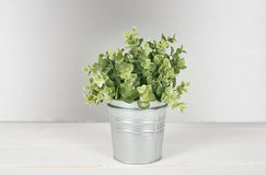 Plant on wooden table. stock photos