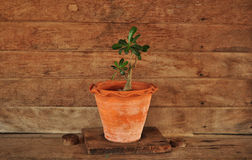 Plant and wooden wall Royalty Free Stock Photography