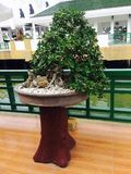 A tree. Plant woods arbor Royalty Free Stock Photo
