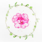 Plant wreath with green Liana and pink flowers on white table background Stock Images