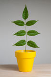 Plant in yellow pot Royalty Free Stock Photos