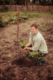 Plant. The young man plants a tree royalty free stock photography