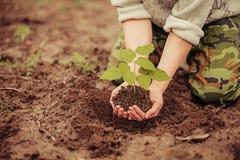 Plant. royalty free stock photos
