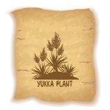 Plant Yucca Silhouettes on Old Paper. Exotic Flowering Plant Yucca Silhouettes and Inscription on Vintage Background of an Old Sheet of Paper. Eps10, Contains vector illustration